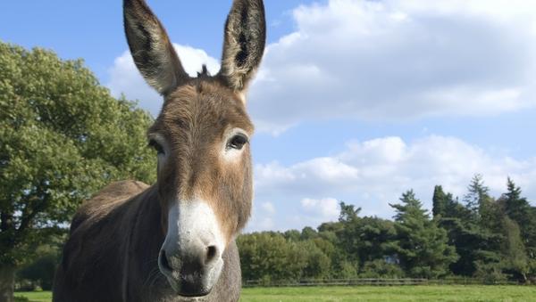 Secret Life of... Donkeys
