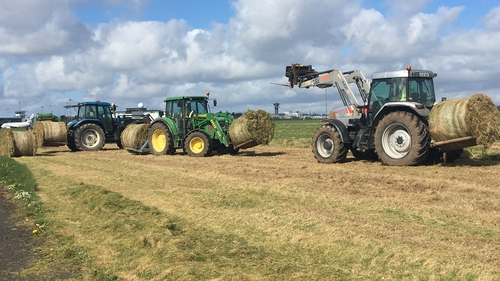 It is the second time in five years that the airport has offered its grass to farmers