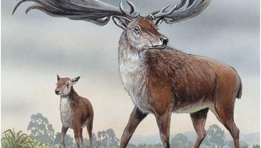 Nature File - Irish Deer.