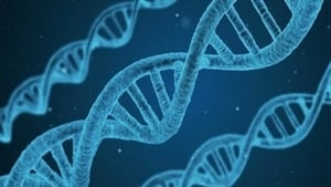 Two scientists believe an Irish version of the Human Genome project could help shed some light on genetic conditions
