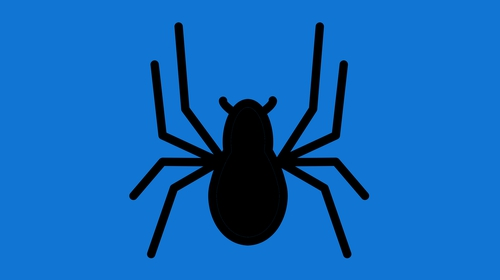 The world's oldest spider has died, aged 43
