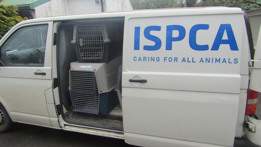 Reports of animal cruelty are at an all time high, says the ISPCA
