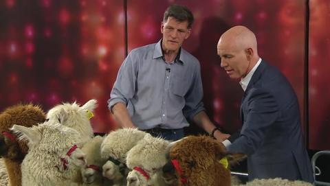 Alpaca Joe | The Ray D'Arcy Show