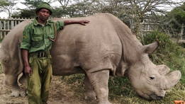 Natural World: The Last of the Rhinos