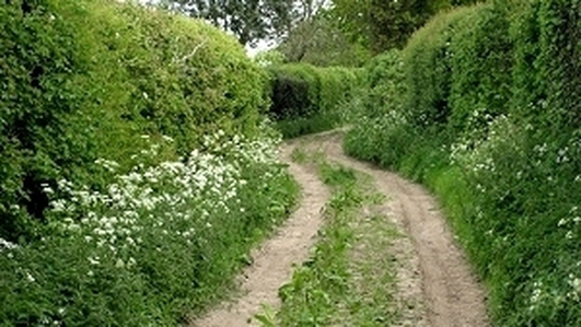 Nature file - Hedgerows