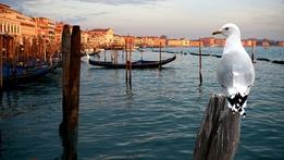 Wild Venice