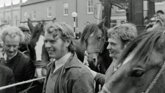 Buttevant Horse Fair