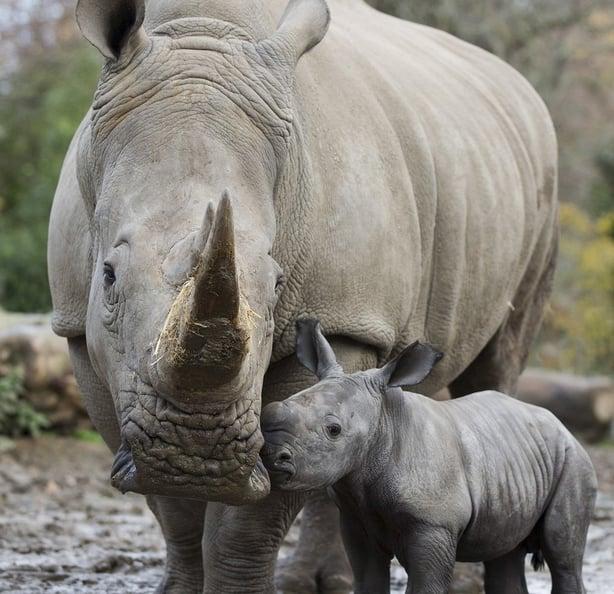Dublin Zoo It S Least 75 A Day To Feed An Elephant