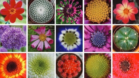 Nature File - The Geometry of flowers.