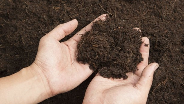 Find out what type of soil you have