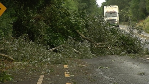 People are advised not to go near fallen trees due to potentially live power lines in the area