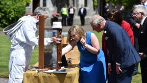 Prince Charles is shown a bee-keeping demonstration by Fiona Edwards-Murphy during a visit to University College Cork