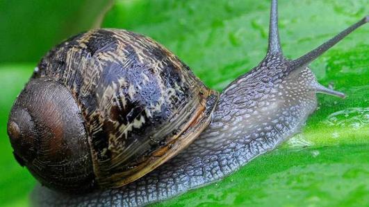 Nature file - Snails