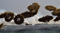 US suspends some military exercises with South Korea
