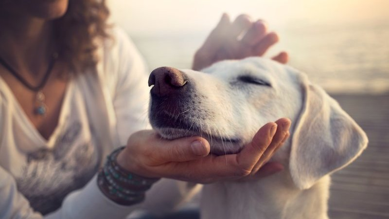 How to Care for Pets in Warm Weather