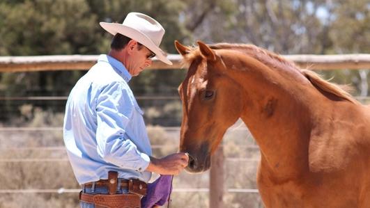 Steve Halfpenny - the art of horsemanship