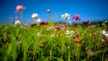 Naturefile - Meadows.