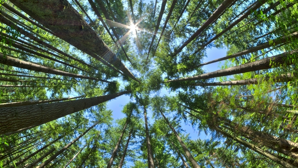 If a tree falls in the forest and there's no-one around, what does it sound like?
