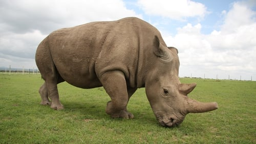The zoo said that at least one of the rhinoceroses made contact with the child
