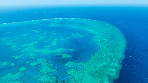 Experts say the reef could have suffered irreparable damage