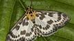 Naturefine - Moths