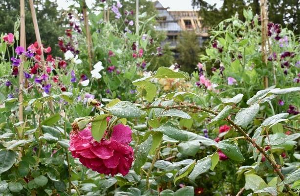 Wood Norton Hotel gastrogays cotswolds garden roses flora rain