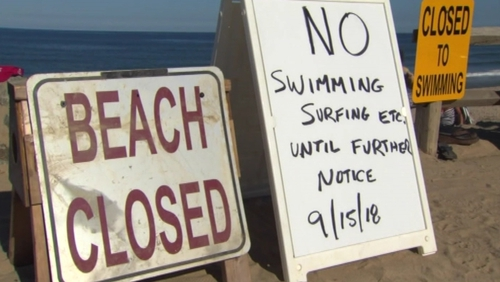 The victim, in his mid-20s, 'was bitten by what is believed to be a shark' while he swam at Newcomb Hollow