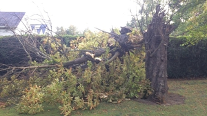 Gardeners will have a job on their hands repairing the damage to their properties