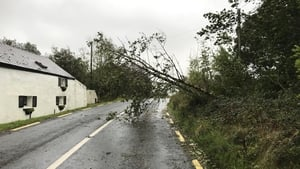 Motorists have to make their way around this tree in Recess, Co Galway (Pic: Jimmy Norman)