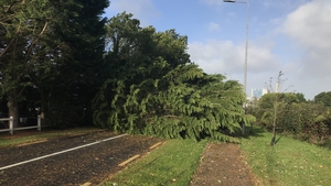 A massive tree has completely blocked the road at Lanesborough in Co Longford
