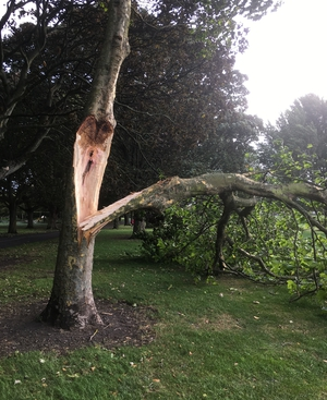 Branches stripped from trees in Fairview Park, Dublin