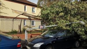 A street light was broken by a falling branch in Ringsend, Dublin