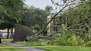 A tree came down on the RTÉ campus due to the high winds