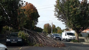 Branches in a residential area in Clonskeagh, Dublin, narrowly miss parked vehicles when they fell