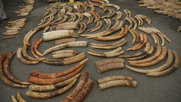 DNA tracking holds the key to defeating ivory traders