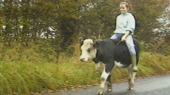 Cloghan Cow Ride