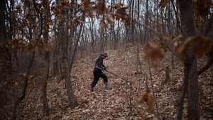 A researcher hunts for landmines in woodland near the DMZ in 2015