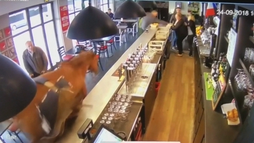 A horse actually walked into a bar and caused absolute chaos