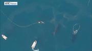 RTÉ News: Whale calf rescued off Australian coast
