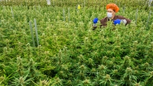 Prime Time - Medicinal Cannabis, Workplace Stress, Ballybrack FC