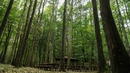 A search of Belgrade Forest on Istanbul's European side began yesterday