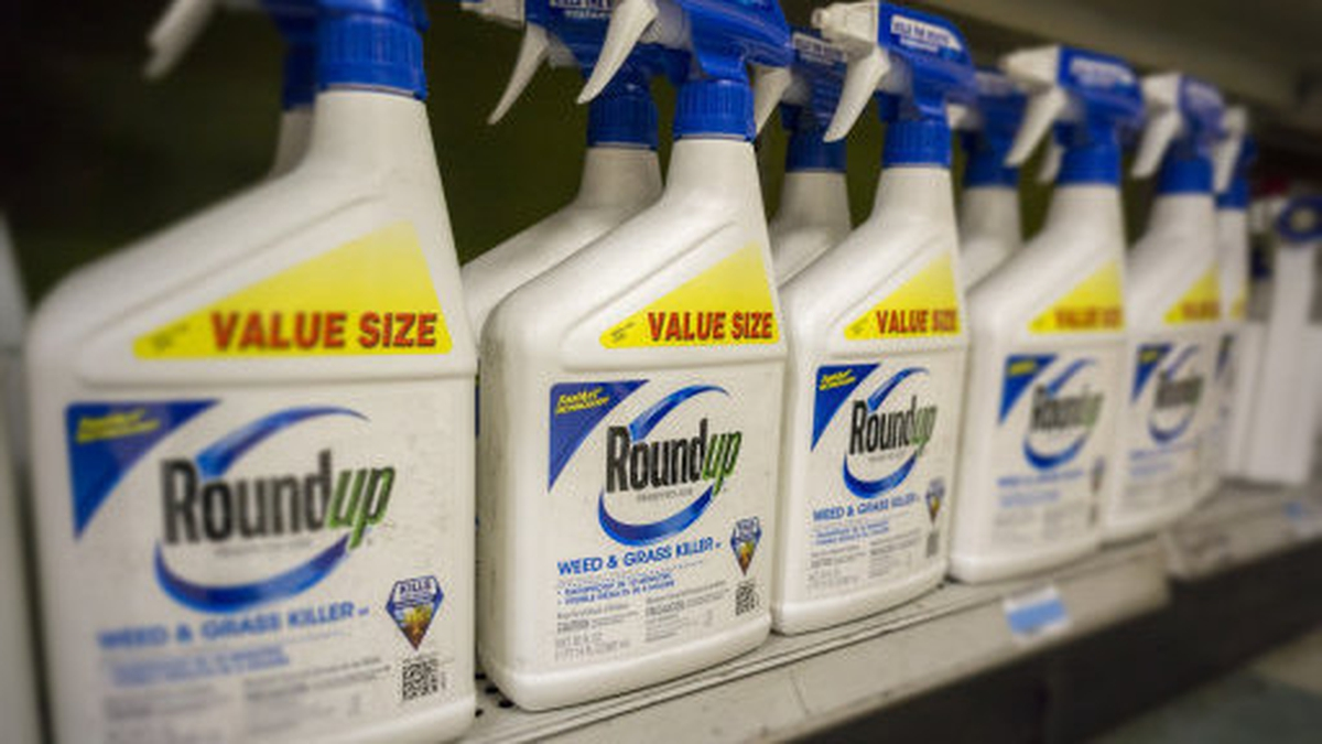 Why are some local authorities still using toxic weed killers?