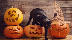 If you want a DIY look for All Hallows Eve, we recommend sticking with a classic: a black cat.