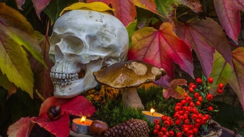 Halloween horticulture is the next frontier in festive decoration