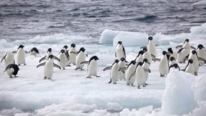 The proposed sanctuary - some five times the size of Germany - would ban fishing in a vast area in the Weddell sea