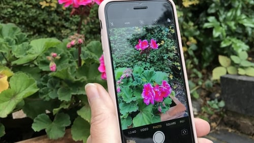 Plant Identification And Advice At Your Fingertips