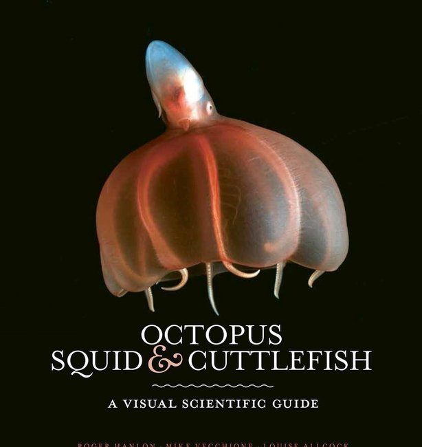 Octopus, Squid And Cuttlefish: A Visual Scientific Guide