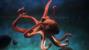 Cephalopods are remarkably adaptable