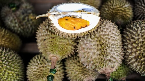 Durian is highly popular in southeast Asia but very divisive