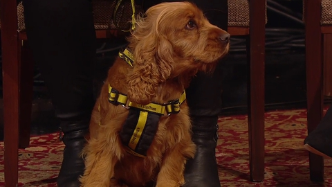 Dogs Trust | The Late Late Show